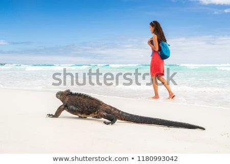 Stockfoto: Galapagos Wildlife Marine Iguana Walking On Tortuga Bay Beach In Santa Cruz Island With Tourist Woma
