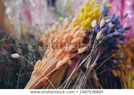 Közelkép gyönyörű aszalt fű virág dekoráció Stock fotó © pressmaster