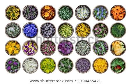 Zucchini edible flowers Stock photo © AGfoto