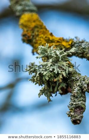 Naturelles résumé printemps bois vert usine Photo stock © prill