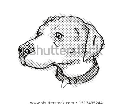 İngilizce karikatür Retro çizim stil Stok fotoğraf © patrimonio
