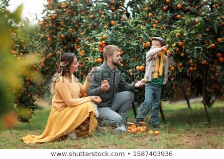 Rodziny trzy osoby rosną dojrzały soczysty Zdjęcia stock © ElenaBatkova
