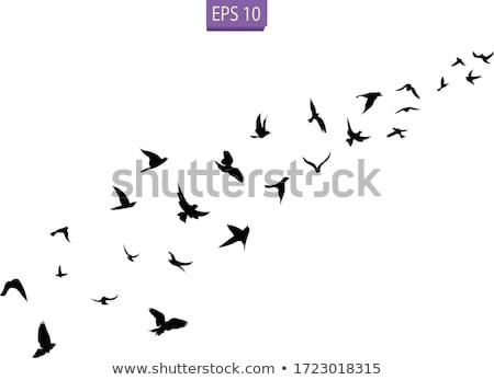 Vuelo aves cielo gaviota libertad Foto stock © foxbiz