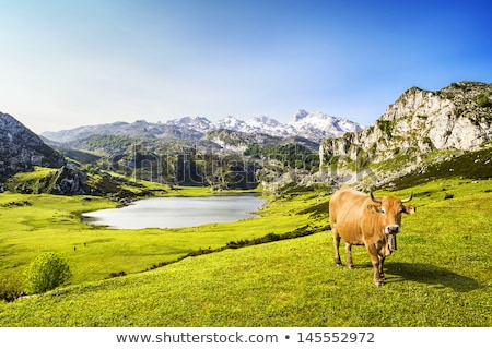 Landscape with snowy mountains and grazing cow Stock photo © BSANI