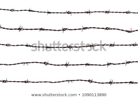 Beş parçalar dikenli tel çiftlik siluet özgürlük Stok fotoğraf © oblachko