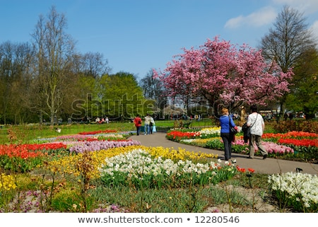 Stock photo: flower bouquets, Keukenhof Gardens, Lisse, Netherlands