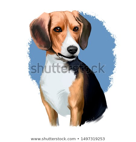 Beagle sabueso perro retrato cute mirando Foto stock © ArenaCreative