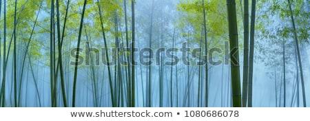 bambusz · erdő · ázsiai · reggel · napfény · fa - stock fotó © smithore