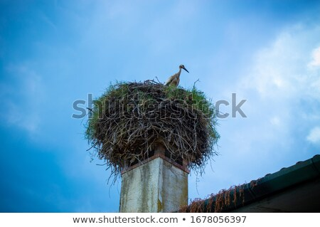 Stork sitting on the top of a roof Stock photo © ryhor