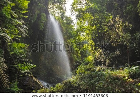 Los Tilos waterfall Laurisilva in La Palma laurel forest Stock photo © lunamarina