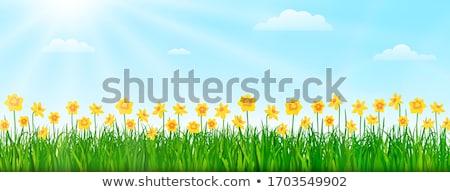 Photo stock: Soleil · fleurs · d'été · fleurs · nuage · printemps · design