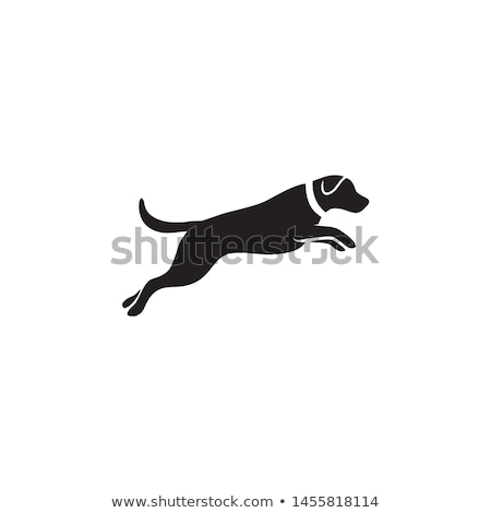 Puppy jumping and running stock photo © pkirillov