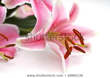 roze · lelie · boeket · geïsoleerd · Blauw · exemplaar · ruimte - stockfoto © enterlinedesign