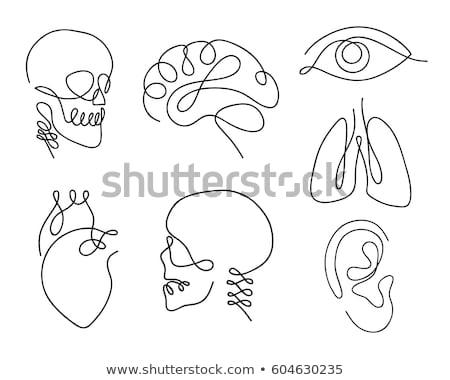 Menselijke schedel sterren Stockfoto © radivoje