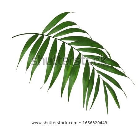 palm · plant · groene · hoofd - stockfoto © stocker