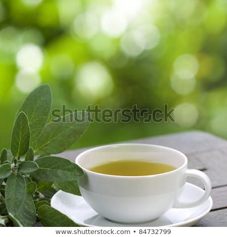 Кубок зеленый мудрец свежие белый лист Сток-фото © marekusz