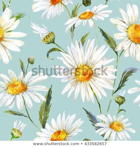 blue White pink Daisy Flowers Stock photo © stocker