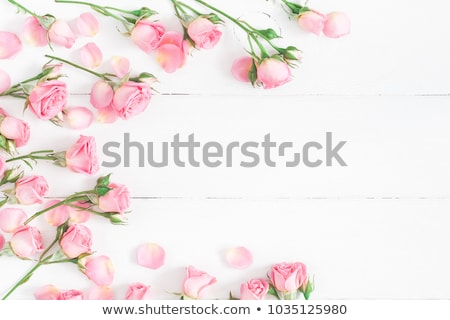 pink rose flower cluster Stock photo © stocker