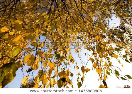 folhas · outono · blue · sky · brilhante · céu · folha - foto stock © meinzahn