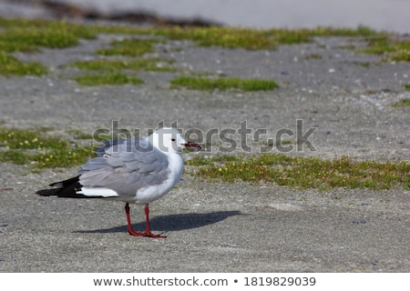 Mouette permanent mer sable sombre pluie Photo stock © ottoduplessis