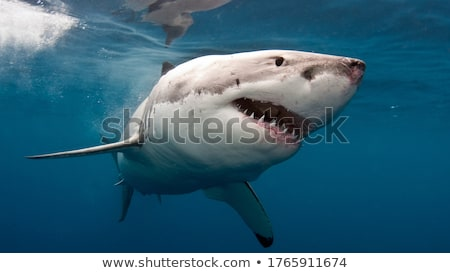 白 · サメ · コンピュータ · 生成された · 3次元の図 - ストックフォト © miro3d