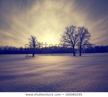 дуб · зима · области · небе · трава · древесины - Сток-фото © gemenacom
