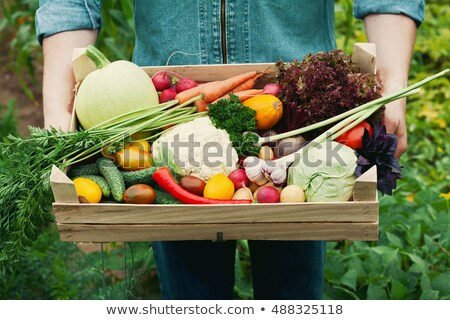 Freshly harvested potatoes and cabbages Stock photo © juniart