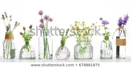 Aromático hierbas flor plantas blanco alimentos Foto stock © cynoclub