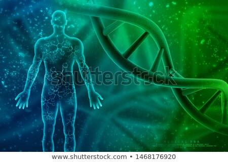 генетический · испытание · Трубы · внутри · скопировать - Сток-фото © idesign