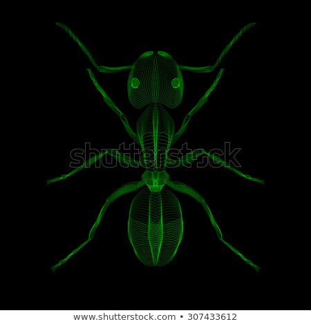 ant 3d style vector illustration for print tatto t shirt stock photo © fosin
