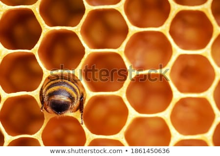 Honeycomb cells close-up with honey stock photo © jordanrusev