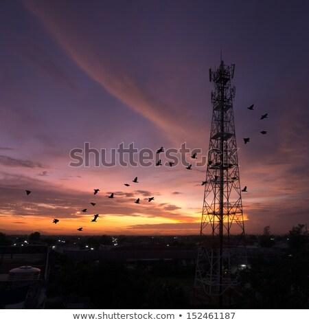 Kuşlar hücresel örnek telefon teknoloji komik Stok fotoğraf © adrenalina