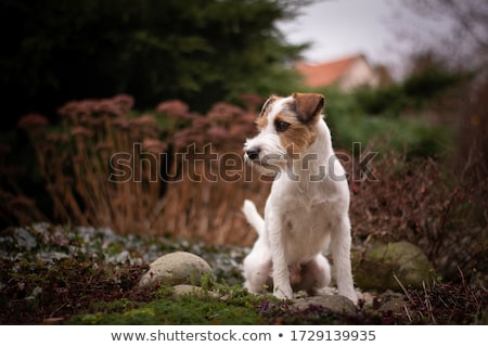 Retrato terrier jardim triste animais engraçado Foto stock © CaptureLight