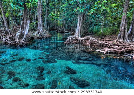 emerald blue pool krabi thailand stock photo © goinyk