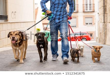 kutya · póráz · lány · golden · retriever · kamasz · női - stock fotó © adrenalina