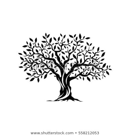 Olivo follaje primavera Italia árbol forestales Foto stock © dutourdumonde