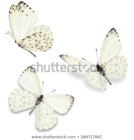 insecten · vlinders · geïsoleerd · witte · mooie · vlinder - stockfoto © robuart