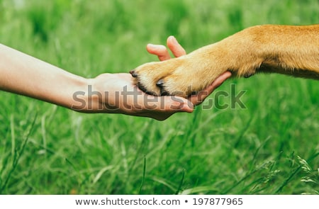 Stock photo: Dog paw and hand shaking
