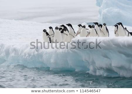 Sarkköri óceán természet madarak sziluett hátterek Stock fotó © Ustofre9