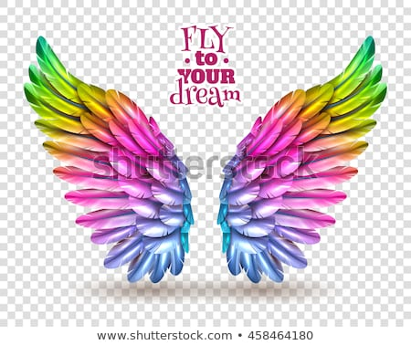 rainbow wings Stock photo © blackmoon979