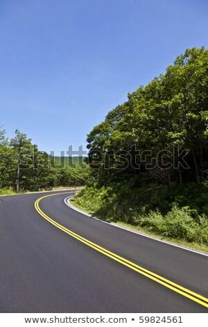 Festői vidéki út hajlatok park gyönyörű fa Stock fotó © meinzahn
