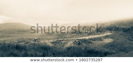 Foto stock: Paisagem · dramático · luz · manhã · céu · floresta