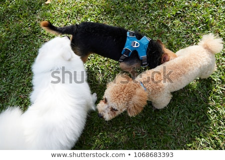 Three Dogs Smelling stock photo © FOTOYOU