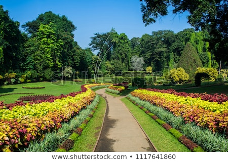 Spring view of the botanical garden Stock photo © Kotenko
