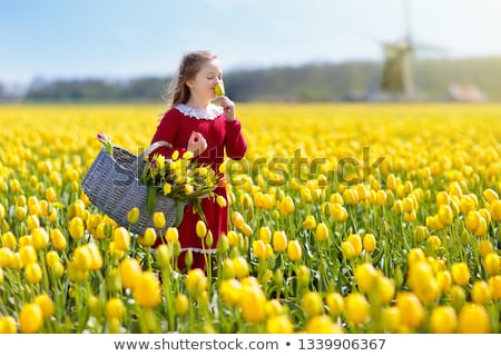 yellow and red tulips on the dutch fields Stock photo © compuinfoto