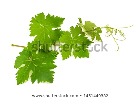 Folhas uvas lugar texto textura abstrato Foto stock © olgaaltunina