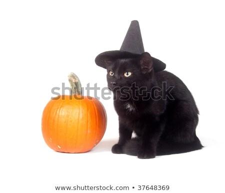 heks · kat · halloween · huisdier · kostuum · hoed - stockfoto © natalia_1947