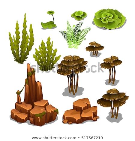 seascape rocks and plants vector illustration stock photo © robuart