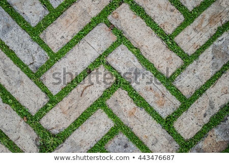 stone path in green grass garden texture Stock photo © lunamarina
