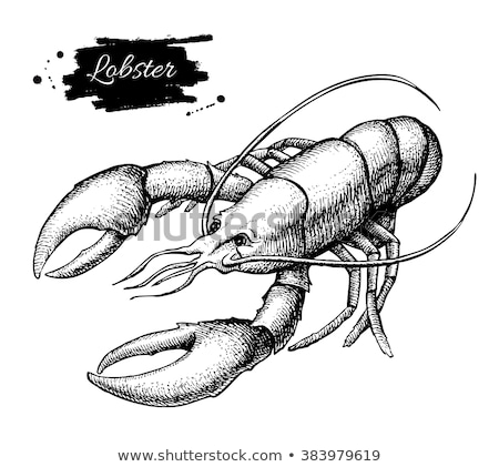 Seafood Sketch Illustration Monochrome Poster Stock photo © robuart